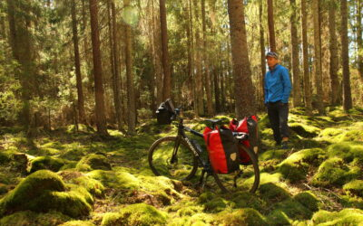Sykkel midt i skogen. Foto.